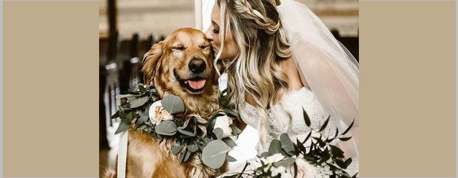 Pawsome ideas to include Dogs in your Destination Wedding